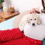 احذرى التعامل مع الحيوانات أثناء فترة الحمل